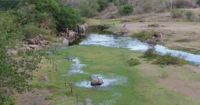 Aesa vai elaborar planos de revitalização do Rio Piranhas